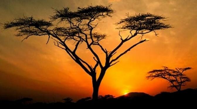 Vous voulez rendre service à l'Afrique ? Foutez-lui la paix !