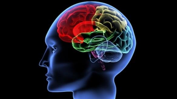 cerveau_2