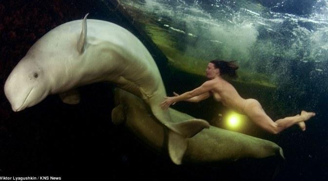Une Russe nage nue avec des bélugas sous la glace