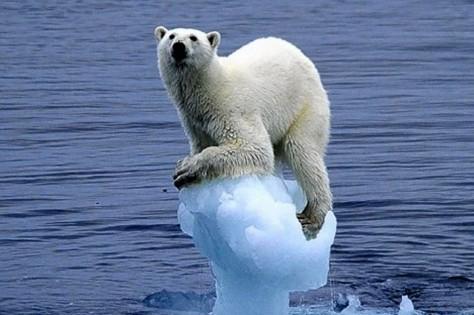 Polar Bear by Carla Lombardo Ehrlich-882919